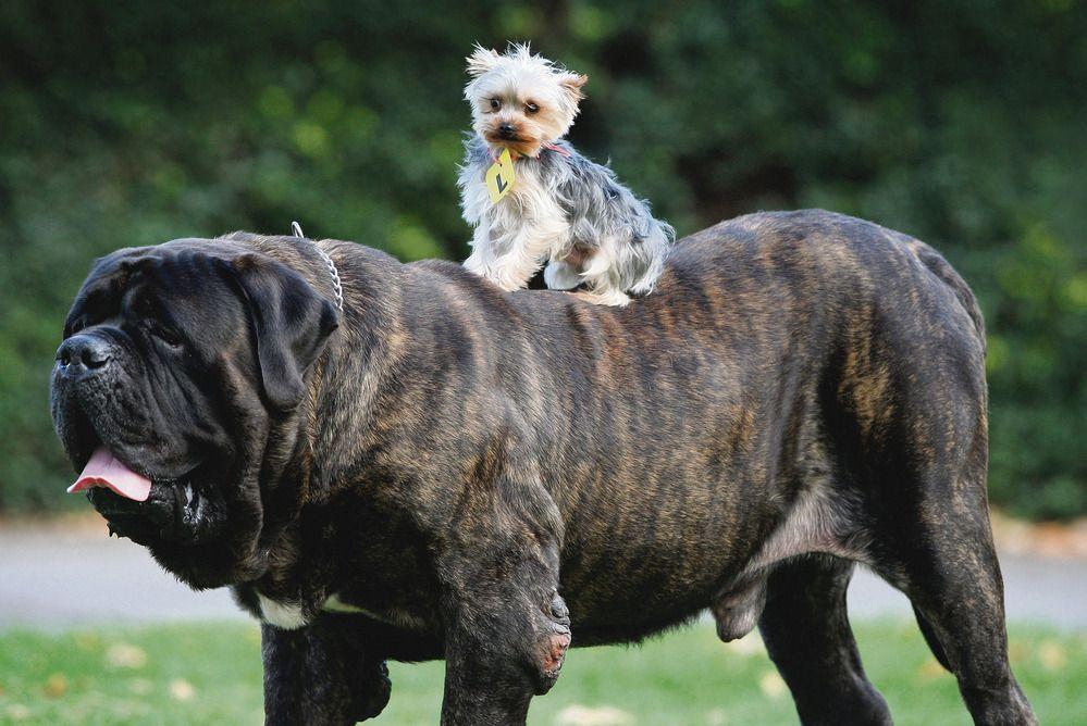 свою большая и маленькая собака фото днях
