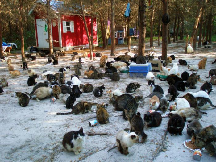 Во Глобальный денек кошек можно приютить котенка. Но лишь на…