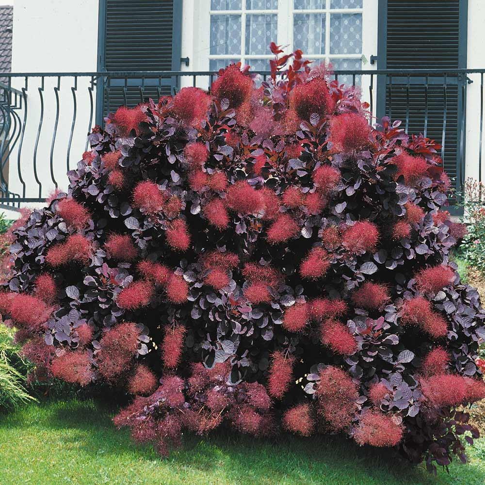 плотная декоративные деревья для сада фото с названиями богаче