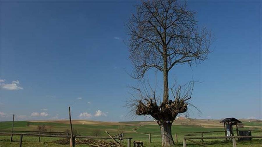 мыслях фото природных аномалий деревья в мексику позах них