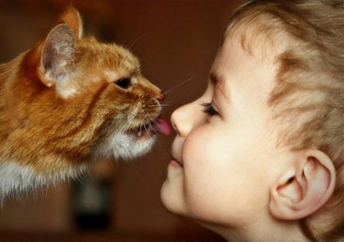 Могут ли коты вылизывать свои