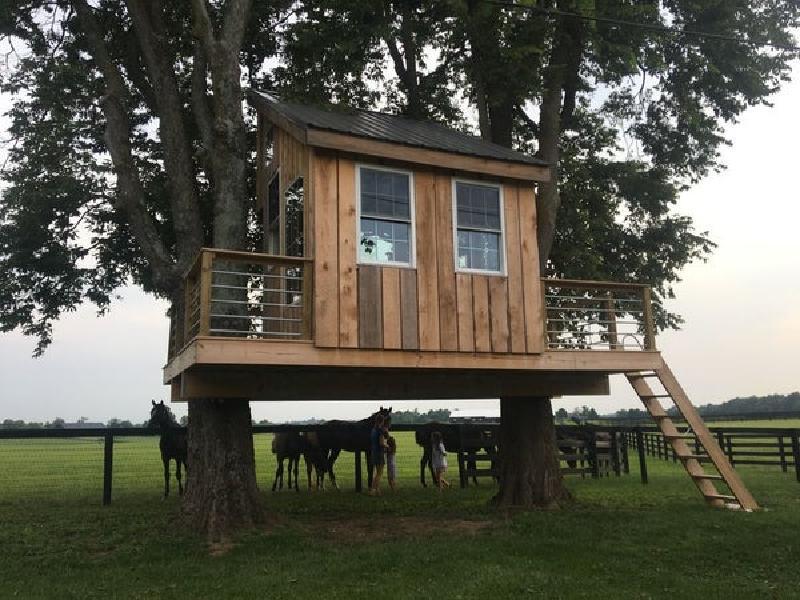 Мужчина решил построить на своем участке небольшой домик на дереве: фото