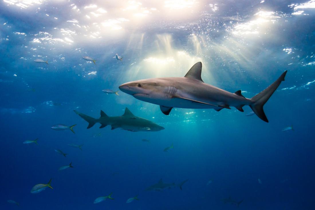 поняла лучшие картинки акул нетрудно догадаться, при