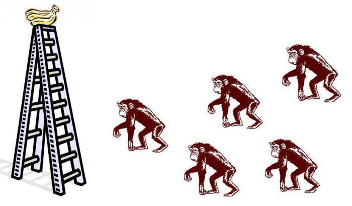 5 обезьян и лестница: как формируется стадный инстинкт