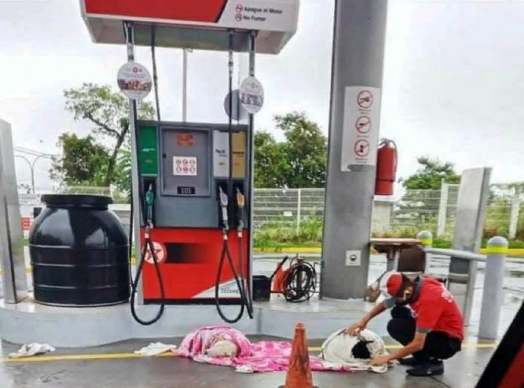 Добрый работник заправки укрыл бездомных собак от дождя