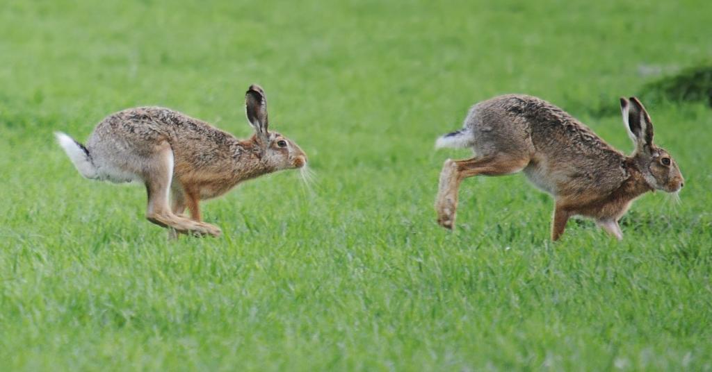 """Узнала продолжение пословицы """"За двумя зайцами погонишься..."""": теперь я понимаю, что вовсе не о """"зайцах"""" надо думать, а смотреть на ситуацию шире"""