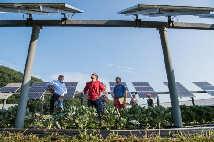 Солнца стало больше: ученые рассказали о неожиданном влиянии карантина на энергетику