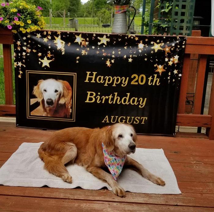 Золотистый ретривер дожил до 20 лет, и семья решила отпраздновать его день рождения