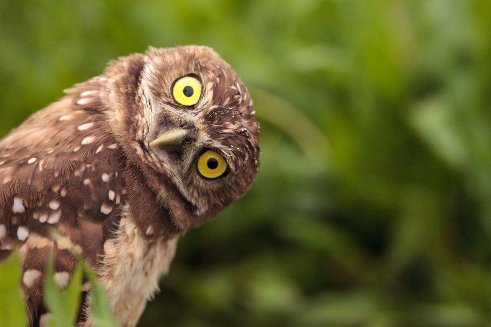 Пользователь выложил в сеть фото спящей совы: люди засомневались, но ученые подтверждают его достоверность