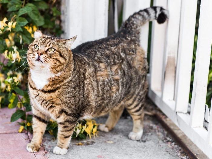Вы завели кошку. Чтобы она была счастливой и здоровой, прислушайтесь к советам ветеринаров: 10 основных ошибок кошатников