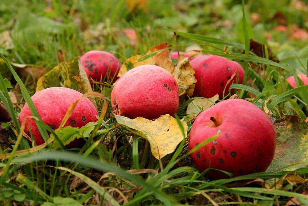 """""""Яблоко от яблони"""": узнала продолжение пословицы и поняла ее реальный смысл"""