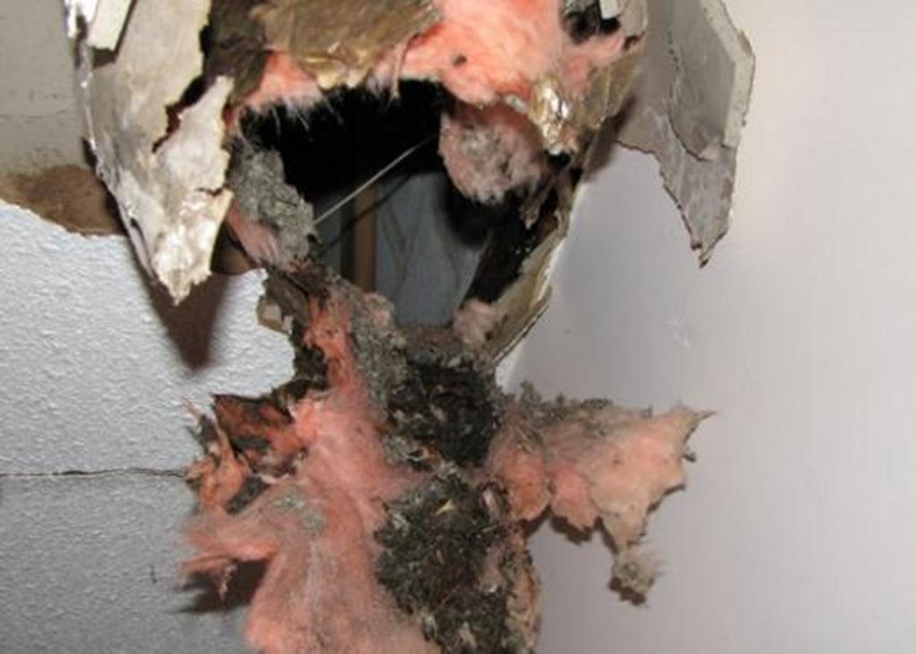 """""""Глазам своим не верю!"""" Вернувшись домой из командировки, девушка обнаружила дыру в потолке одной из комнат"""