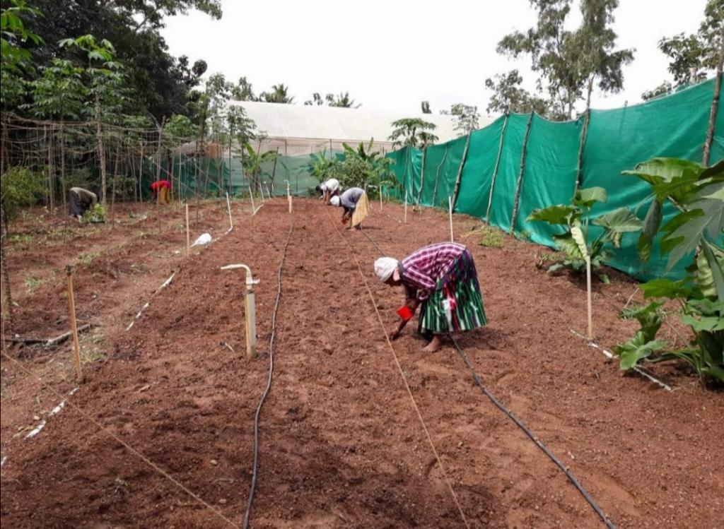 Жители деревни решились на обработку неплодородной земли: через 4 года плантацию просто не узнать