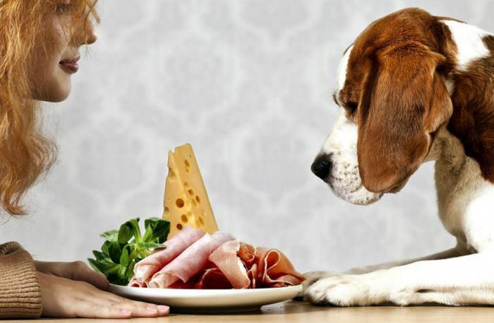 Еда для домашних животных