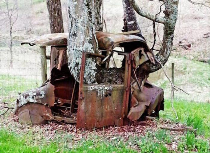 Деревья, которым не мешают расти даже машины: 10 необычных фото
