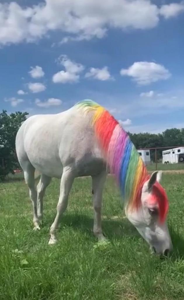 """Они все-таки существуют: девушка """"превратила"""" свою лошадь в единорога"""