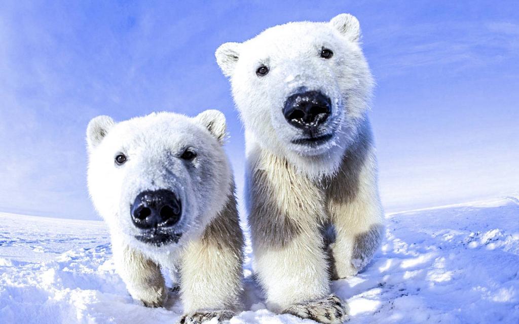 Звезда реалити-шоу сделала пожертвование в благотворительный фонд парка дикой природы, чтобы стать опекуном белого медведя