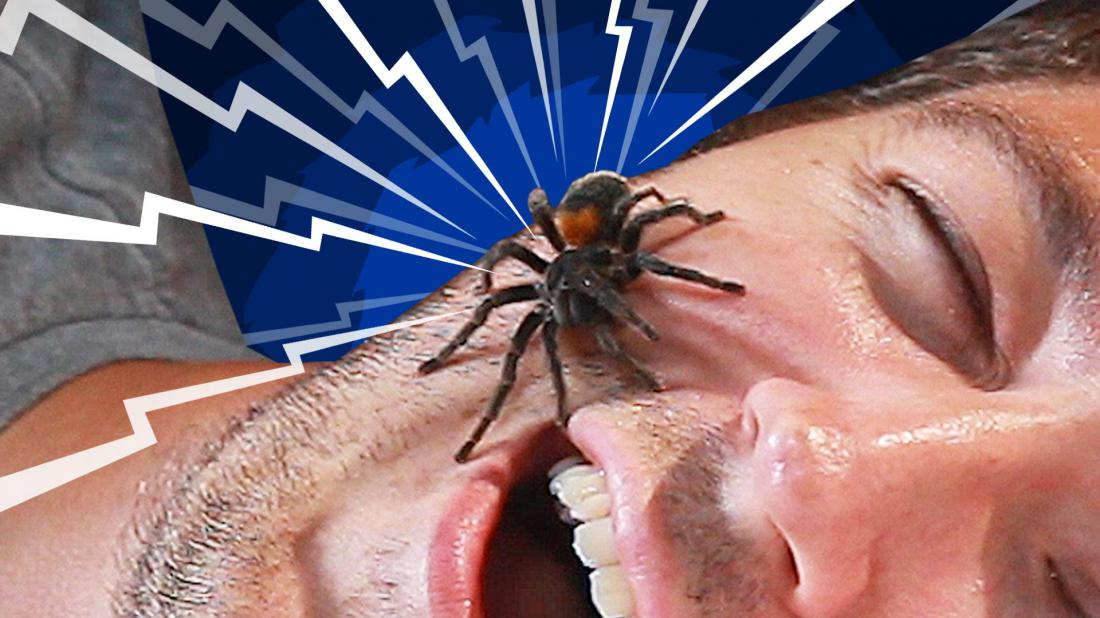 К чему во сне паук сосет мою кровь