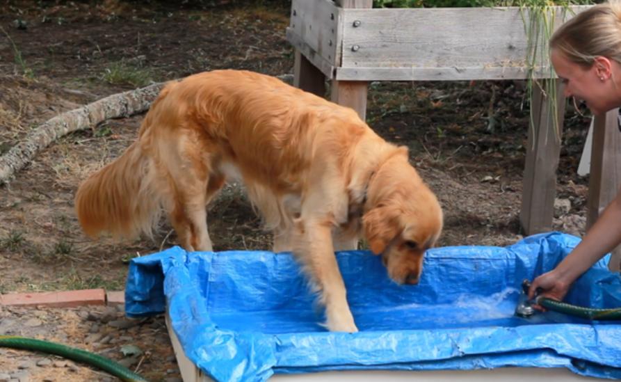 Моя собака просто обожает воду, поэтому я смастерила небольшой бассейн, в котором она плещется днями напролет