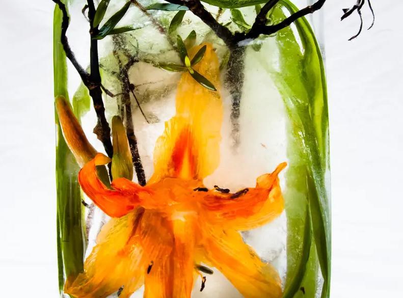 Идея для заработка: британская художница Мариса Кулатто создает натюрморты из растений, замороженных в воде: (фото)