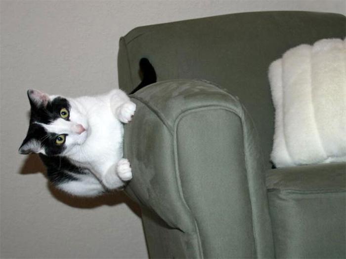 12 котов, которые бросили вызов гравитации и, что важнее, победили!