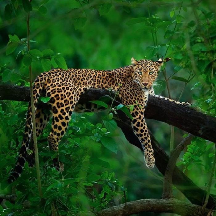 Фотограф дикой природы просидел в кустах шесть дней, чтобы сделать уникальный кадр с леопардом и пантерой: он завораживает (фото)