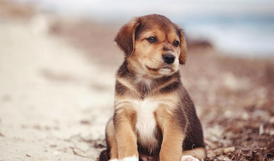 Животные должны получать достаточную физическую нагрузку и не оставаться в одиночестве слишком долго: новое правило выгула собак в Германии заставляет владельцев призадуматься