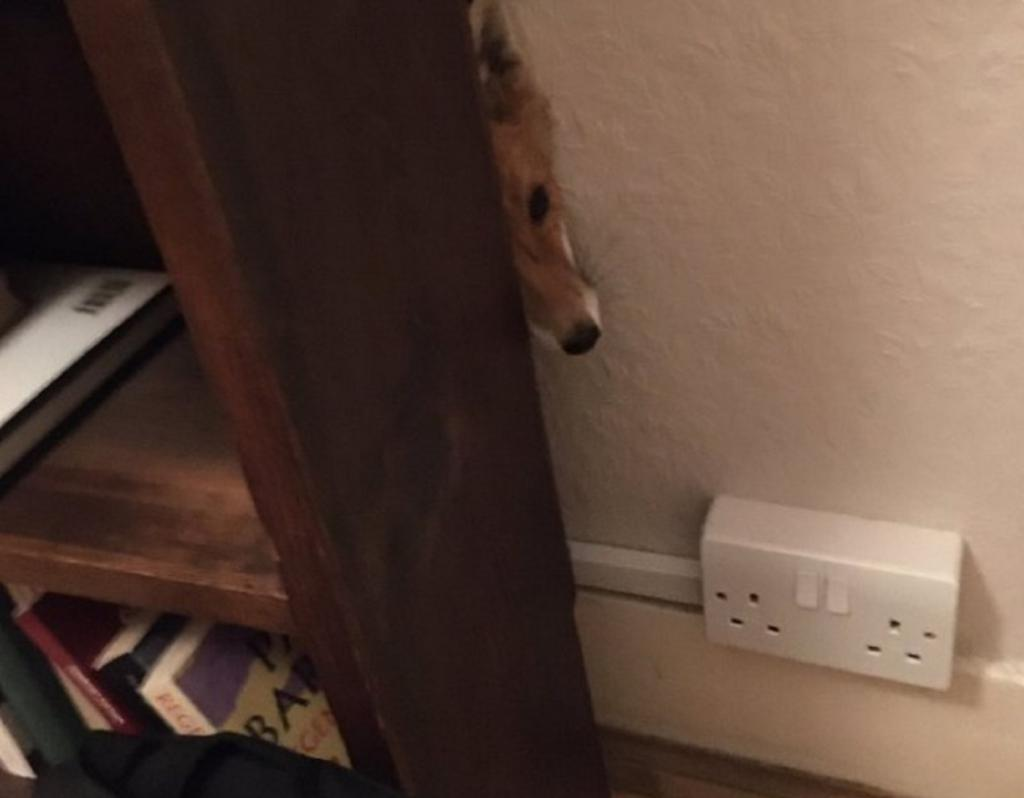 10 раз, когда люди пришли с работы и обнаружили лис в своих домах
