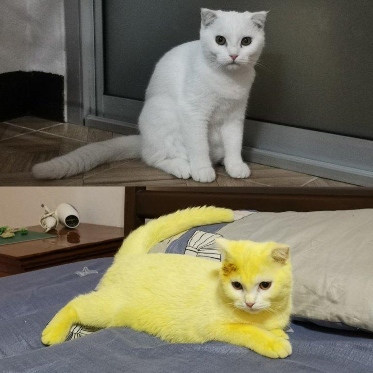 Куркума дала эффект: женщина лечила кошку народным методом и получила здорового питомца