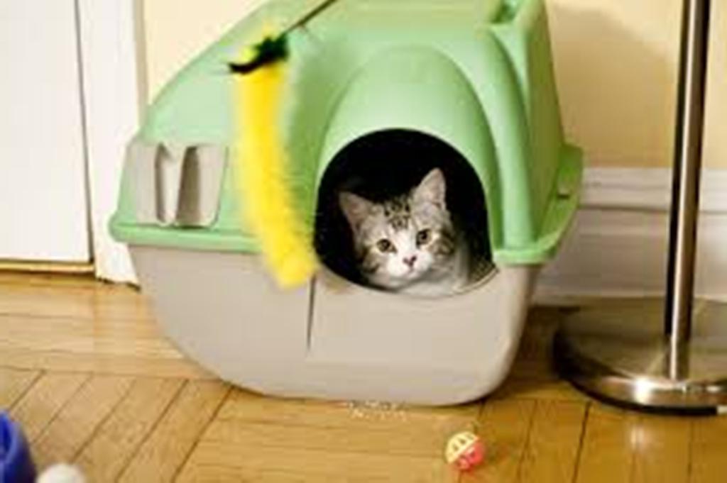 У меня живут кошки, и раньше я покупала дезодорант для лотков. Теперь делаю его сама