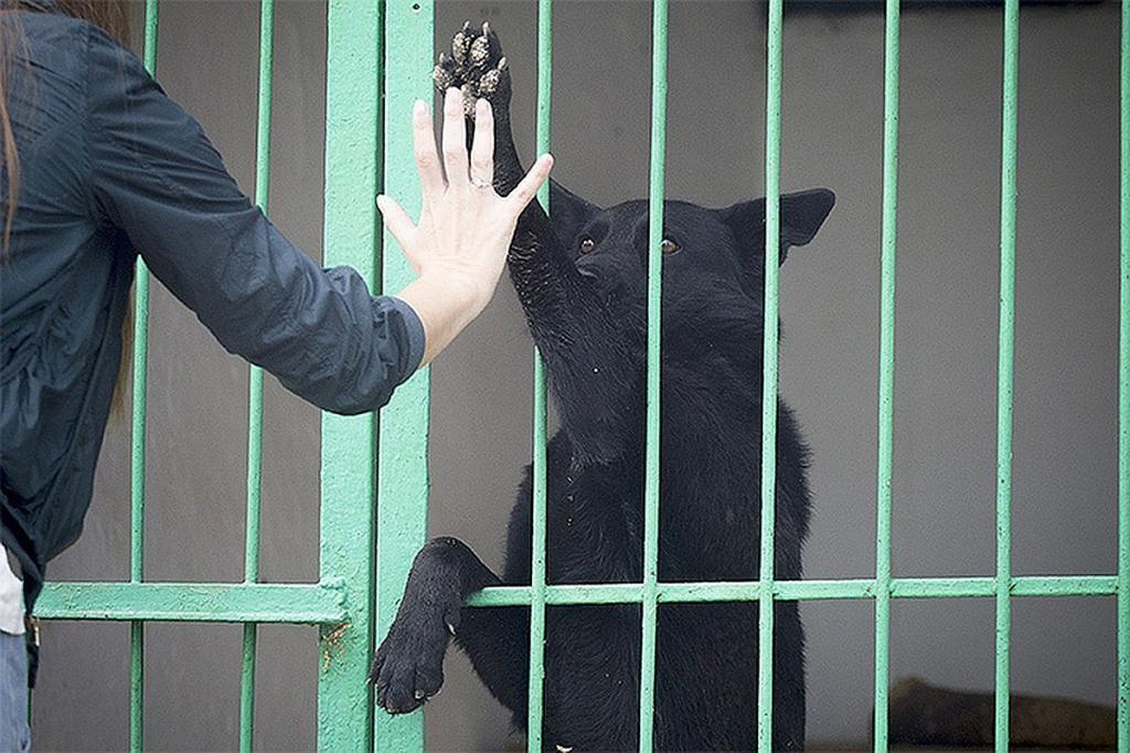 """""""Уже 11 котов и семь собак нашли свой дом"""": единая база приютов для животных появится в приложении """"Московский транспорт"""""""