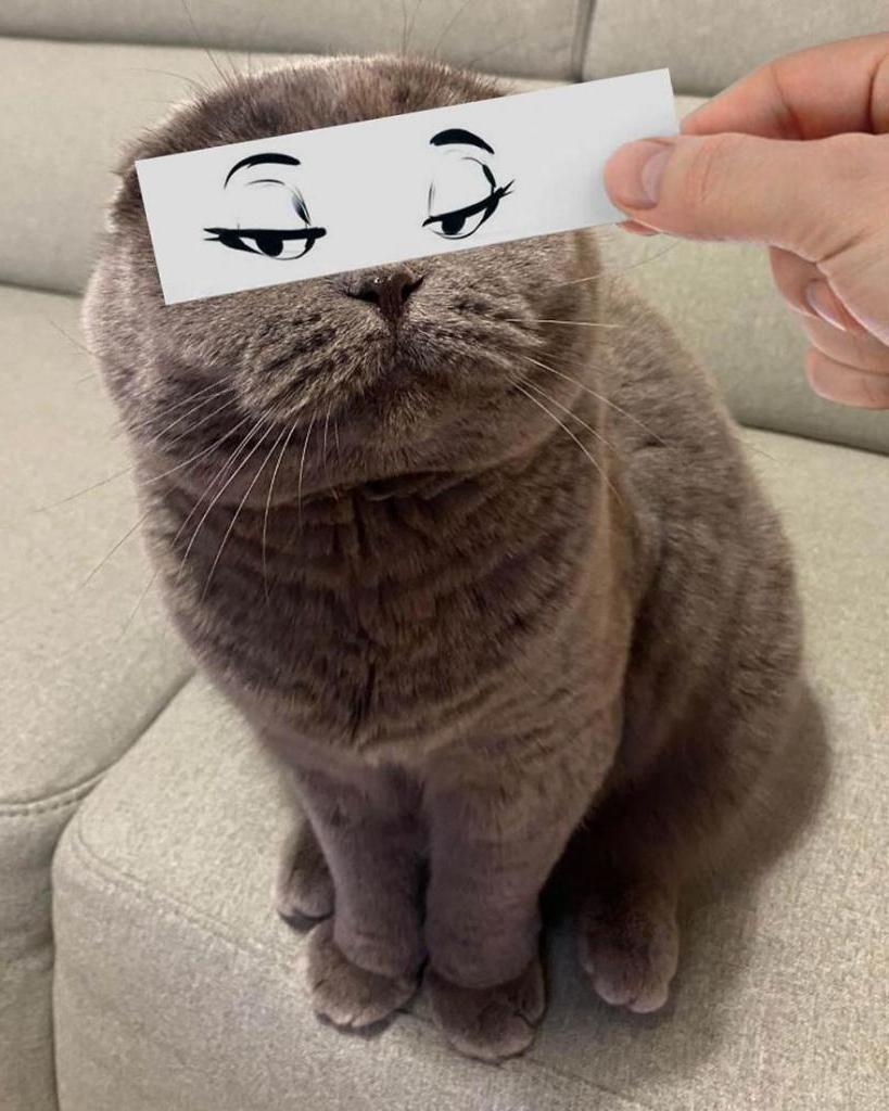 Листочек, ручка и много фантазии. Мужчина придает своим котам разные эмоции, а подписчики смеются до слез