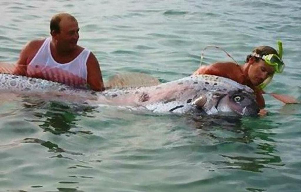 Увидев высунувшуюся из воды голову, туристы поспешили на берег. Оказалось, их испугало легендарное существо