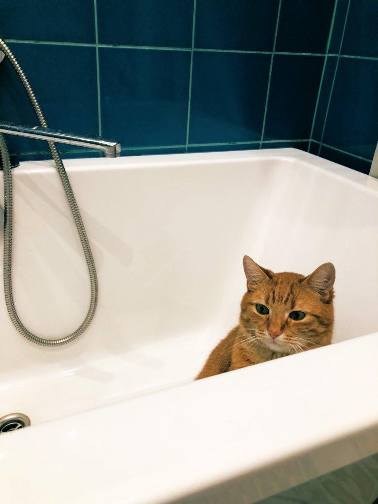 Мой кот обожает сидеть в пустой ванне. Ветеринар объяснил, чем может быть вызвано такое увлечение, и сказал, что мой питомец не один такой