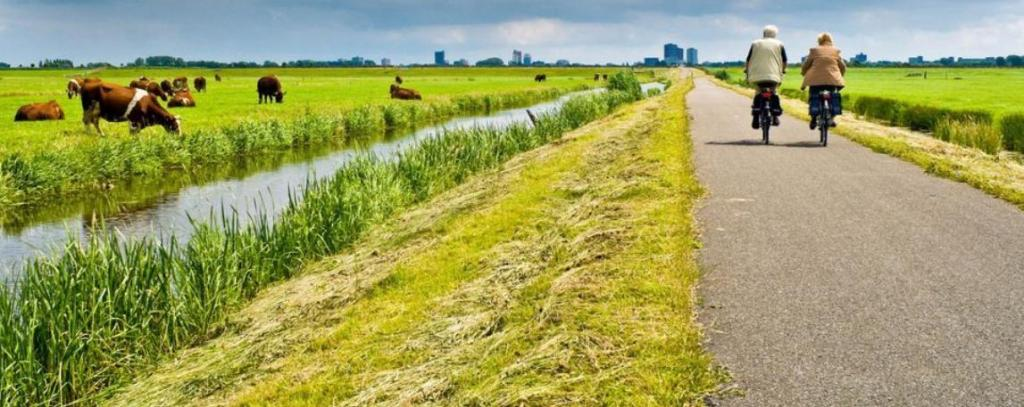 Труд и молочные продукты, по предположению ученых, сделали голландцев самыми высокими в мире
