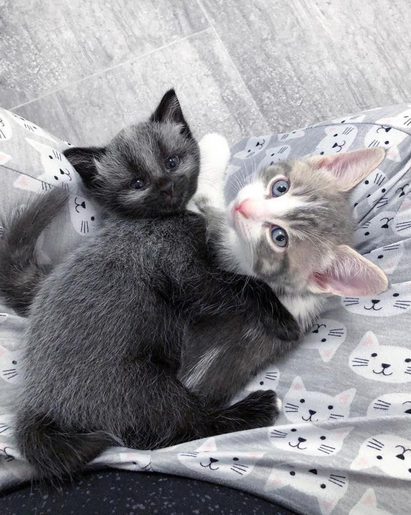 Симпатичный окрас и милая мордочка. За месяц грязный котенок стал красавцем