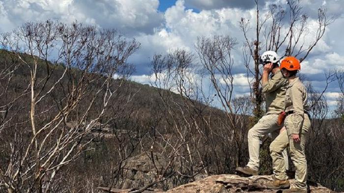 Современники динозавров нуждаются в помощи: ботаники борются за спасение старейших сосен в мире от огня австралийских пожаров