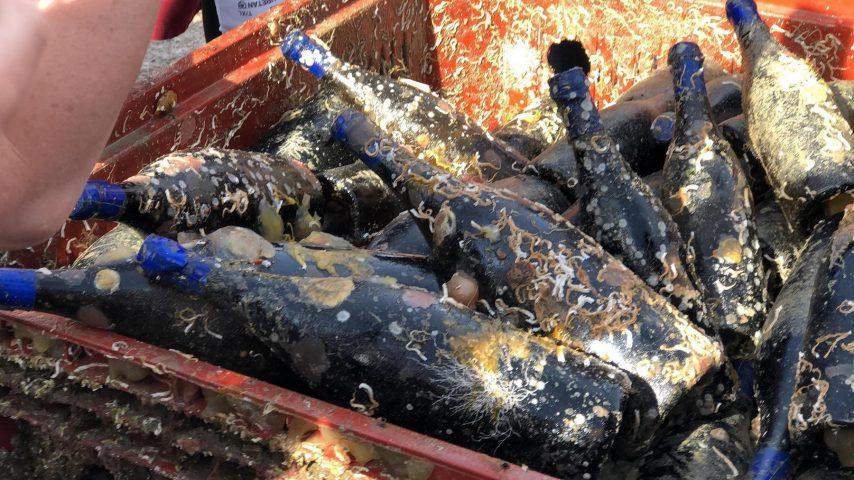 Выглядит как сундук с сокровищами: французские виноделы год выдерживали более 600 бутылок напитка под водой