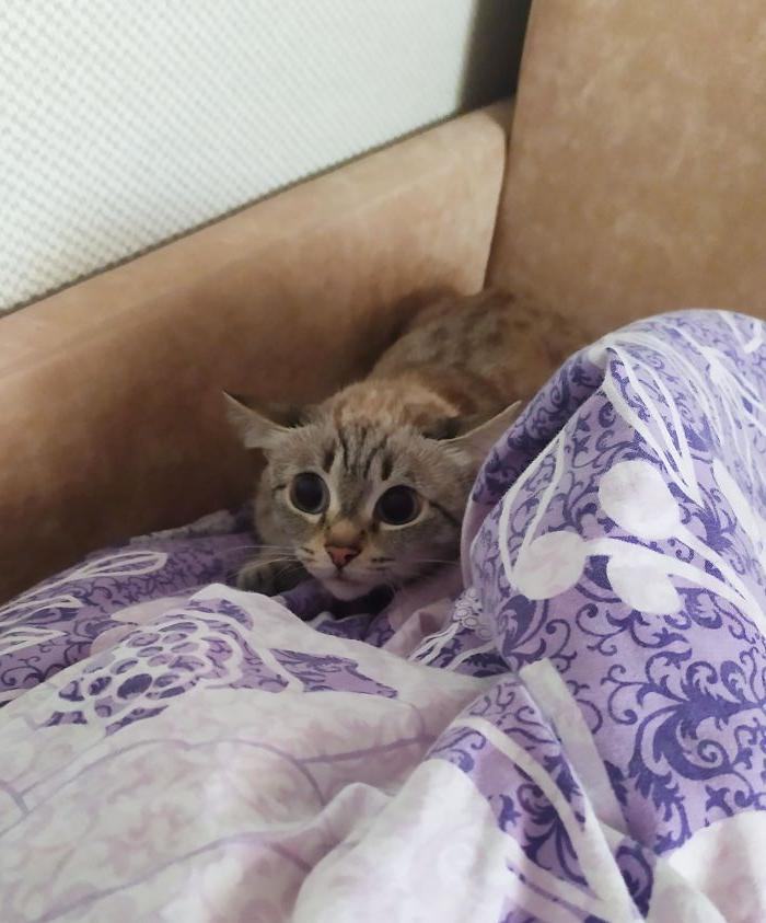 10 котов, которые решили, что они опасные хищники: от этого еще смешнее (фото)