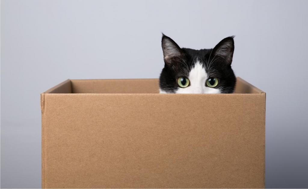 Никогда не понимала, почему кошки так любят залезать в картонные коробки, пока не поговорила с ветеринаром: оказывается, все дело в безопасности