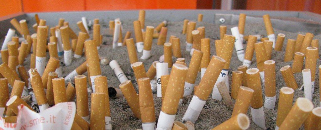Мрачная статистика: фантики и пакеты от чипсов стали наиболее часто встречающимся пляжным мусором, впервые вытеснив окурки сигарет