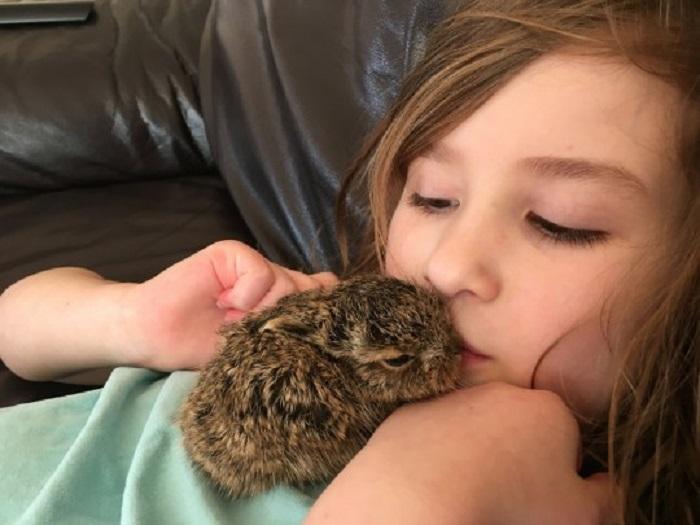 Заяц-сирота каждый день приходит на порог к семье, которая его спасла еще малышом