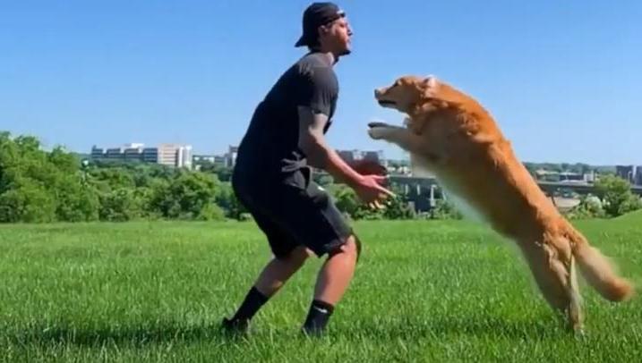 Хозяин научил золотистого ретривера трюку: теперь пес любит обниматься (видео)