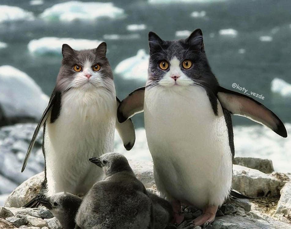 Котоовца и котогусеница. Морда кошки,а тельце чужое: на это стоит посмотреть