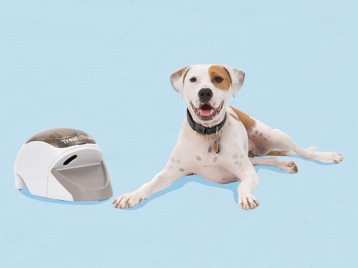 Чтобы помочь питомцу преодолеть тревожность, включите белый шум. 10 способов успокоить собаку (по мнению ветеринаров)