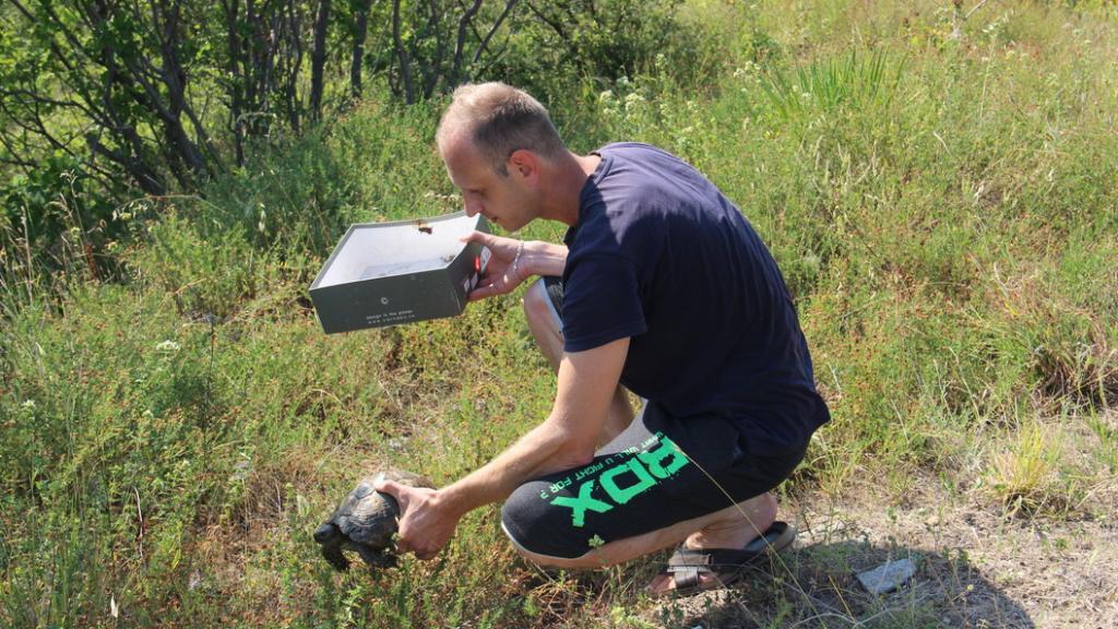 В Адлере местные жители спасли редкую черепаху: в национальном парке таких всего около 30 особей