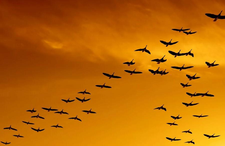 14 сентября - День слушания шорохов: нужно прекратить бегать и суетиться, а просто сесть на скамейку и насладиться окружающим миром