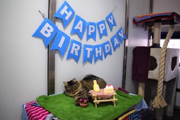 Бездомная кошка, прославившаяся благодаря своему дню рождения, на который никто не пришел, наконец обрела семью
