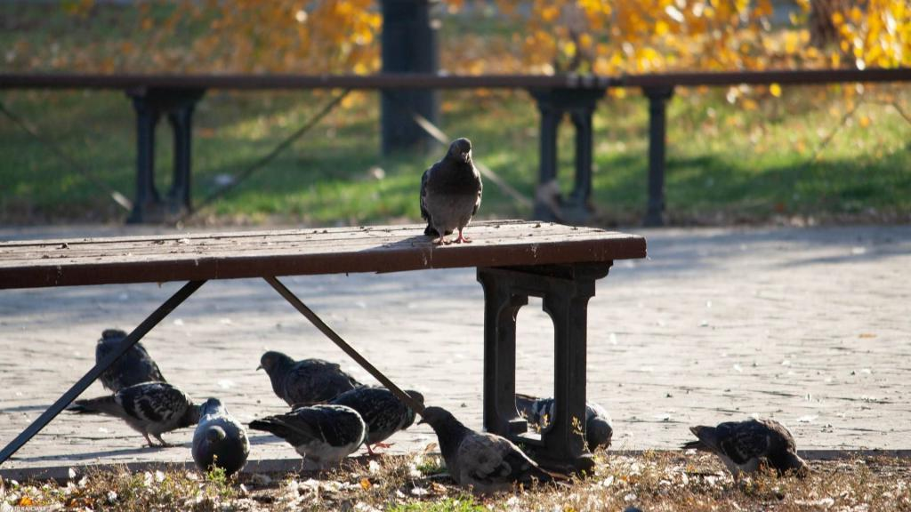 В сентябре в Приморье, в октябре в Центральной России: эксперты рассказали, когда и где ждать бабьего лета