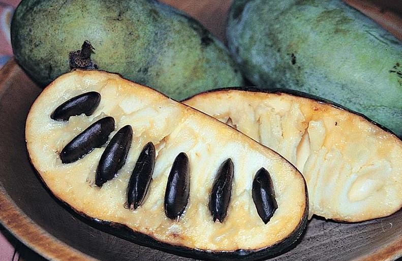 Сочные и сладкие, похожие на банан по текстуре, а по вкусу и на дыню, и на ананас одновременно: в Крыму выращивают азимину